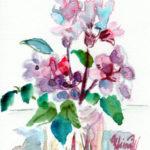岩牡丹の花